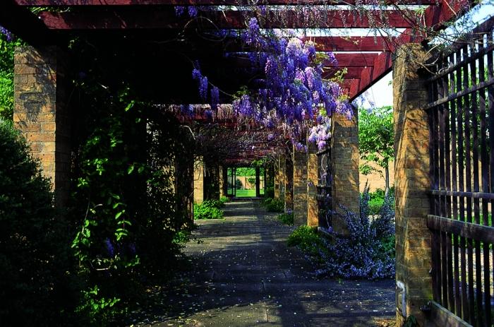 wOLFSON COURTfloralwalkway