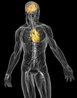 mind body connection research paper There are some scientists out there who believe that the mind-body connection fact that countless peer-reviewed studies published by many reputable scientists and institutions have shown a direct connection between our mind and our body a growing body of scientific research.